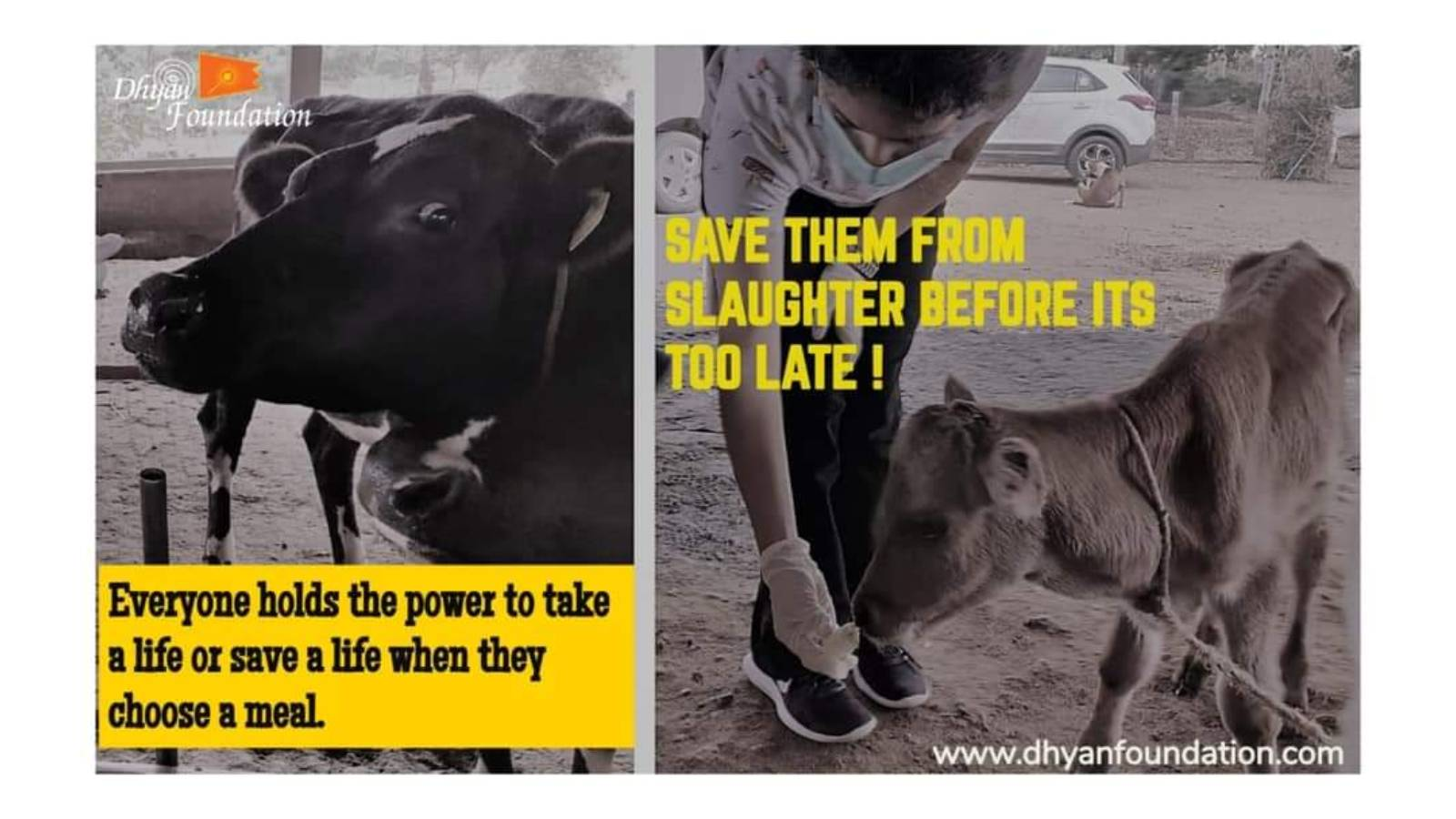 Save Them from Slaughter
