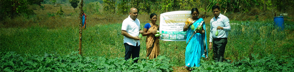 Support Sustainable Agriculture in Tribal Block in Daringbadi, Odisha