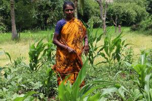 Provide Livelihoods for Tribal Women and Conserve the Environment
