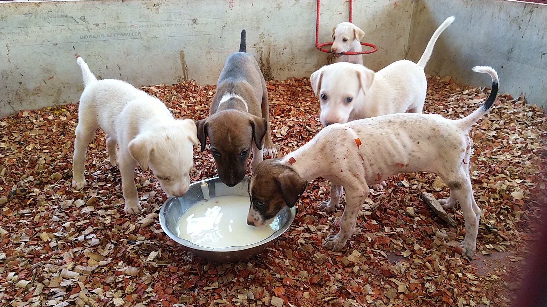 Food and Medicines for the Treatment of Animals in Distress