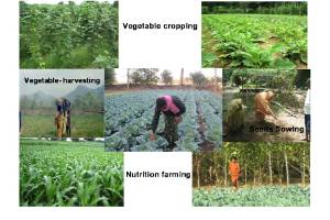 Pathways to Sustainable livelihoods During COVID-19 Pandemic and Beyond