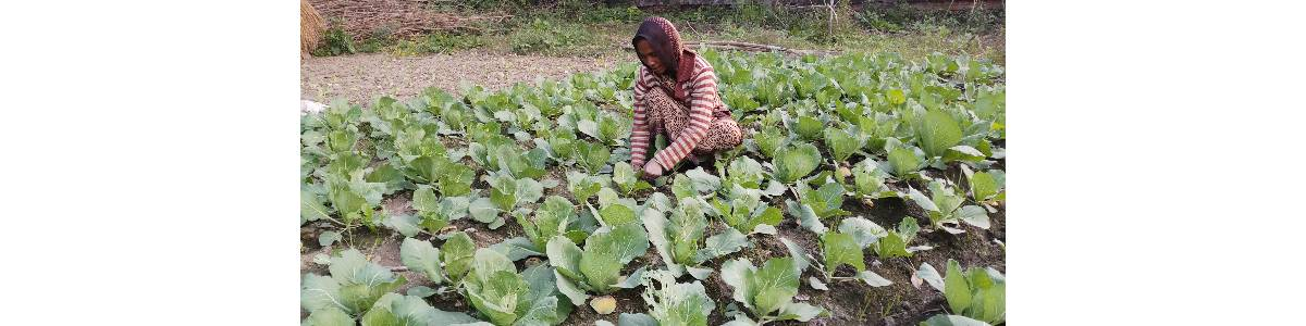 Enabling Rural Women(from Migrant Families) to develop Organic Vegetable Gardens to fight malnutrition and improved income in Kanpur Dehat District of Uttar Pradesh