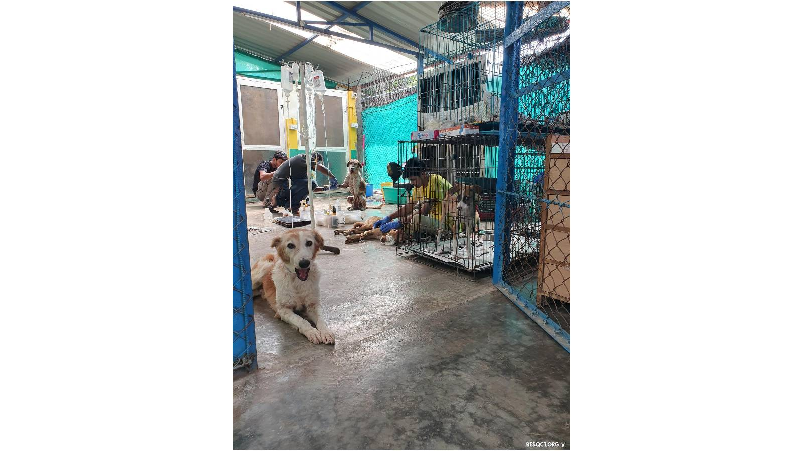 Medical Treatment for Street Dogs in our Kennels