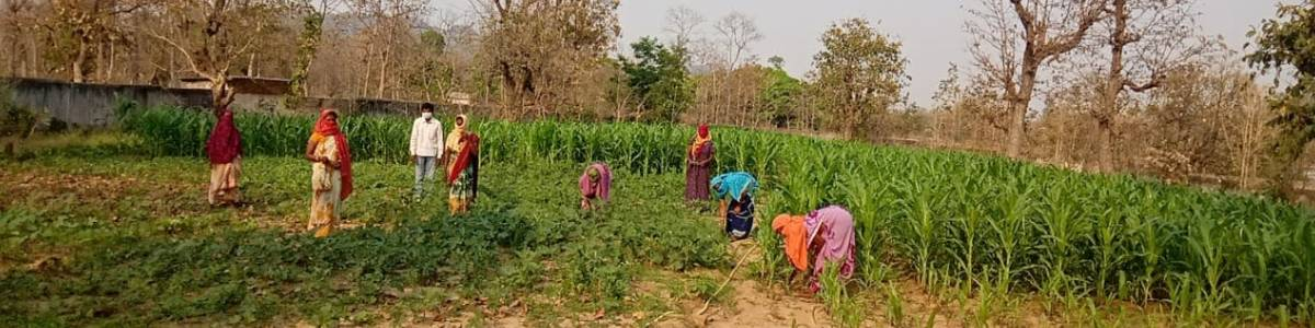 One acre farming kit for 1200 farmers affected by Covid-19 in Karnataka and Madhya Pradesh