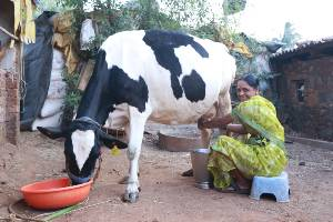 Income Compensation for Women Dairy Farmers