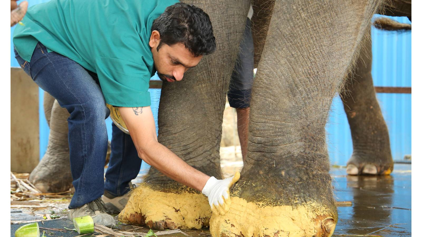 WSOS vet treating rescued elephants foot