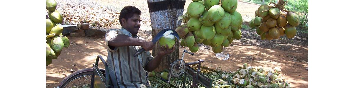 Eco-Friendly Income Generation  Programme for the Persons with mild Intellectual Disabilities by Producing Areca Plates