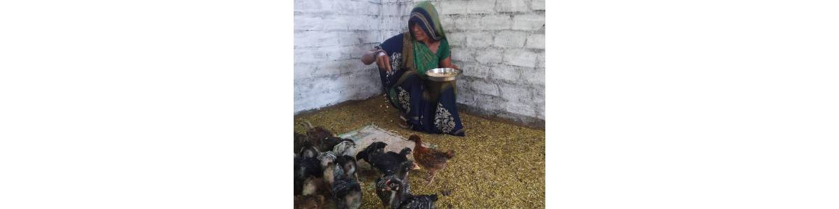 Poultry Farming as a livelihood support during this COVID lockdown