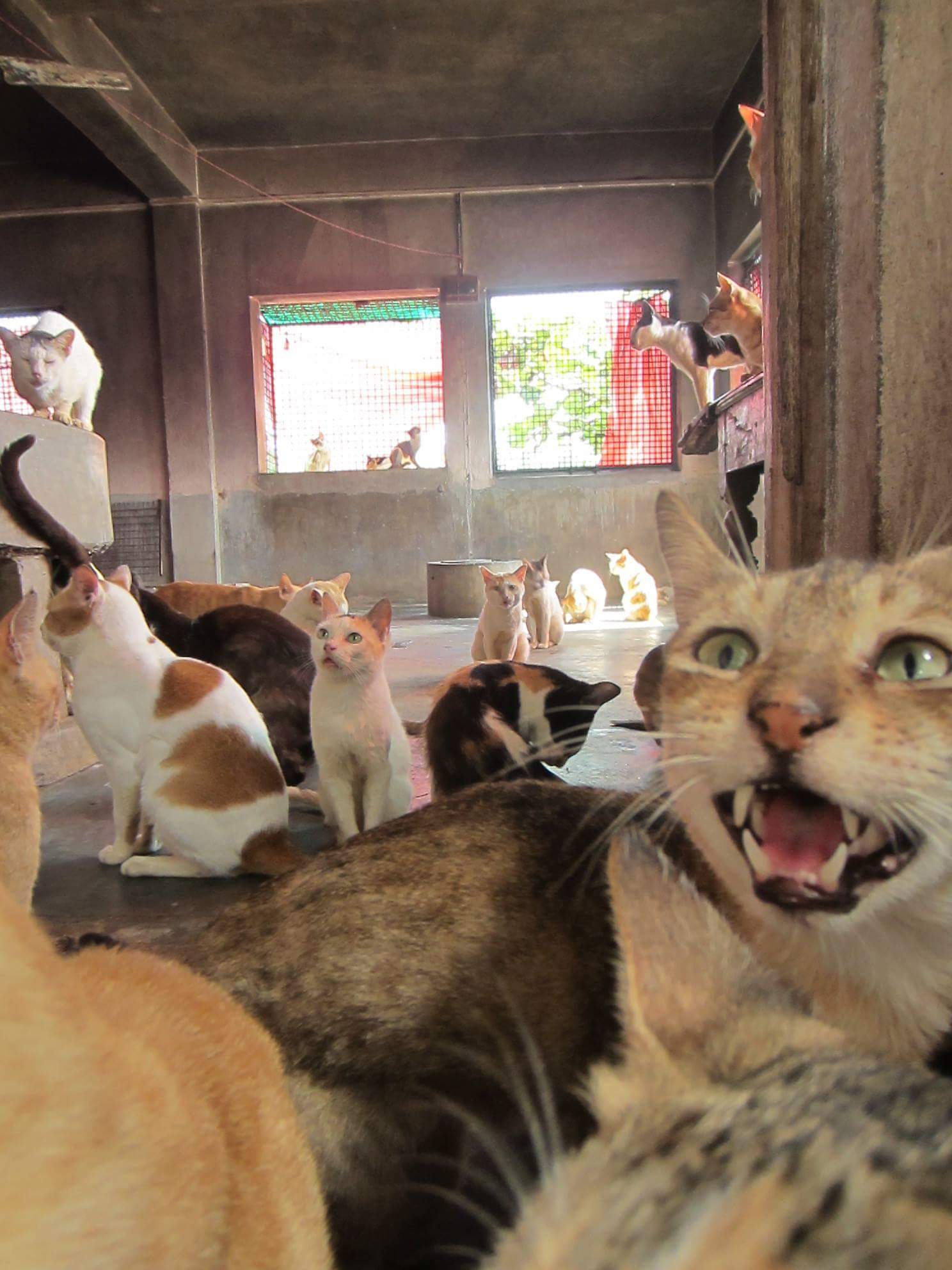 Food and Medicine for 177 Rescued Cats at Love N Care for Animals Shelter
