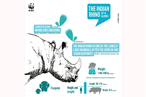 Horn Not OK Please - Support Rohit's mission to save the Indian Rhino