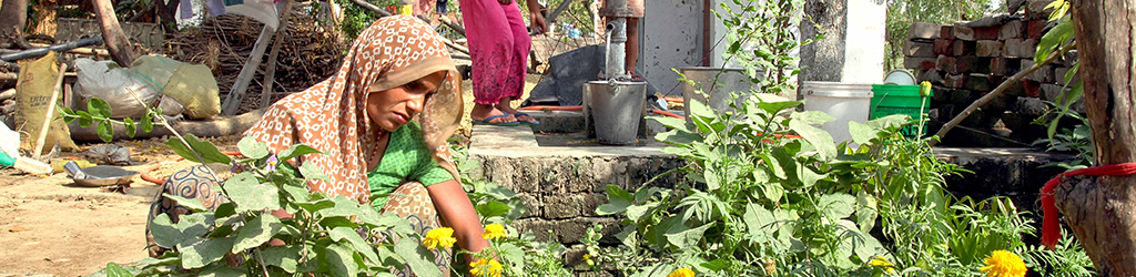 Support Organic Kitchen Garden and Gift Nutrition to Marginalized Families in Kanpur Dehat