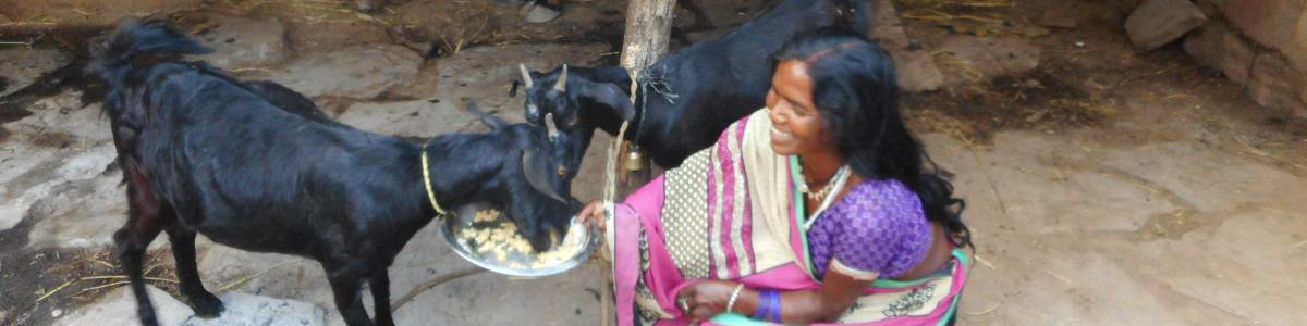 Food security and livelihood of Tribal families