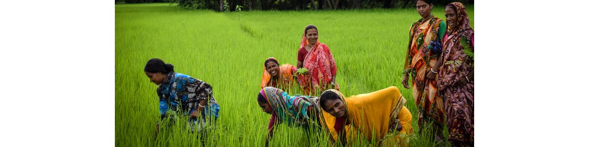 Sustain Livelihood and Food Security Among Migrant Workers and Small/Marginalised Farmers in Bihar