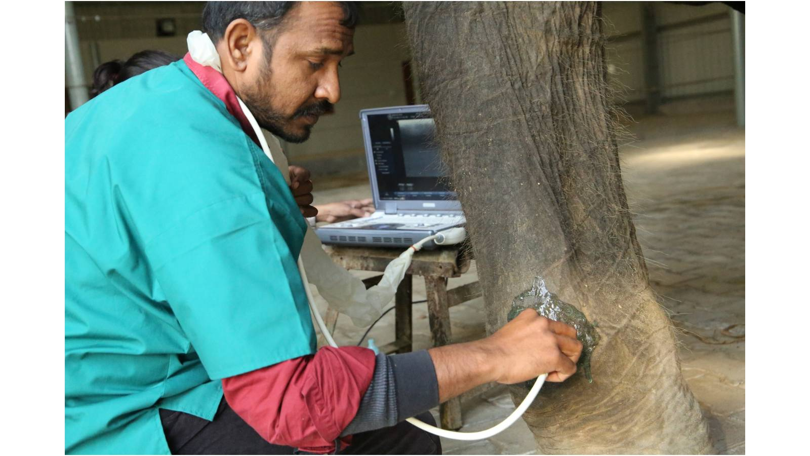 WSOS vet treating elephant foot