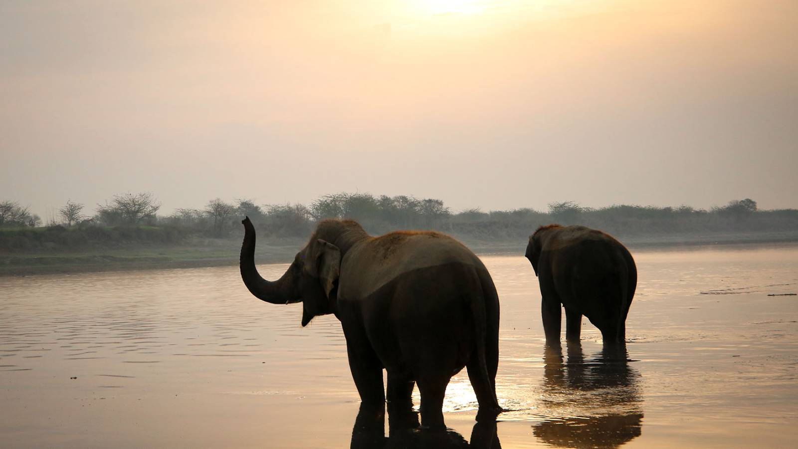 Sunset with rescued elephants at the Yamuna river